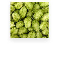 Dry Hopping - craft beer fermentation process
